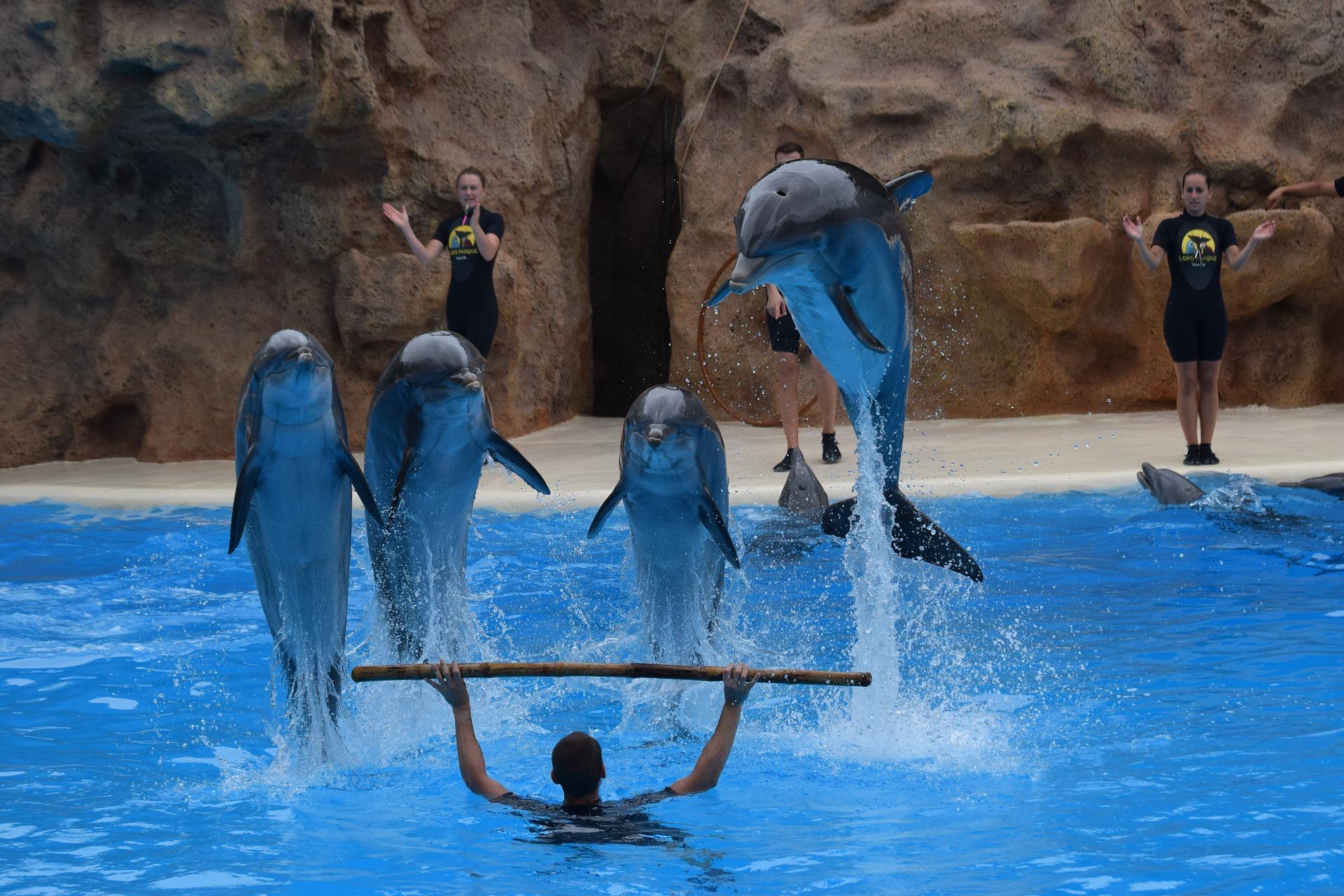 loro parque zoológico de tenerife