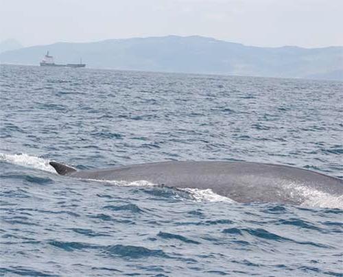 ballenas mallorca parque cabrera
