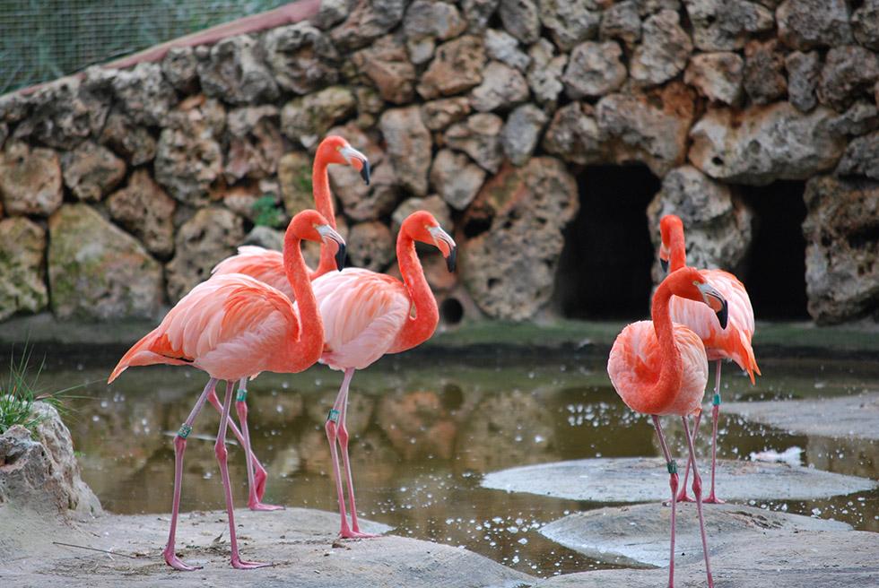 safari zoo de sa coma