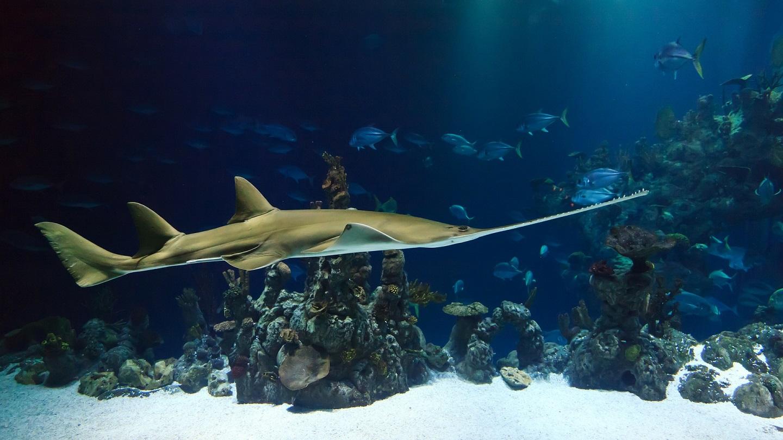 acuario mallorca