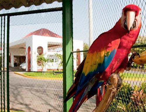 mejores hoteles de Managua